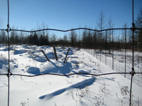 Image of 'Grey County Pastoral: Proton Township Exclosure,' Winter, 2013.